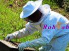 อาชีพเลี้ยงผึ้ง