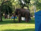 """ระทึก! """"ช้างป่า"""" บุกลานกลางเต้นท์ ผากล้วยไม้ """"เขาใหญ่"""" กระทืบนักท่องเที่ยวดับคาเต็นท์"""