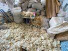 ทลายโรงงานถุงมือยาง รับซื้อถุงมือยางใช้แล้ว มาซักล้าง – ผึ่งลม  แพ็คใส่กล่องขายผ่านเฟซบุ๊ก-ไลน์